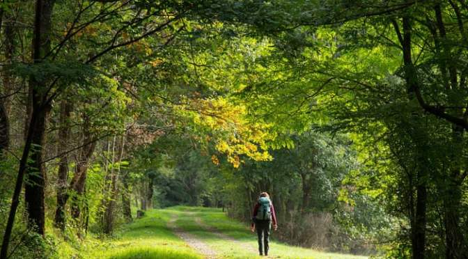 120 minutes a week in nature is the key to good health: Study